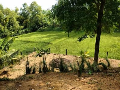 The paddy farm that borders our villa