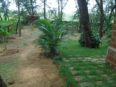 The small garden in front of the living space